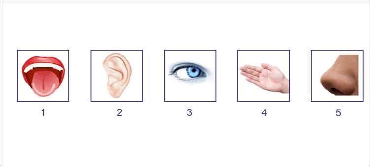 пять-чувств