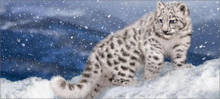 снежный-барс