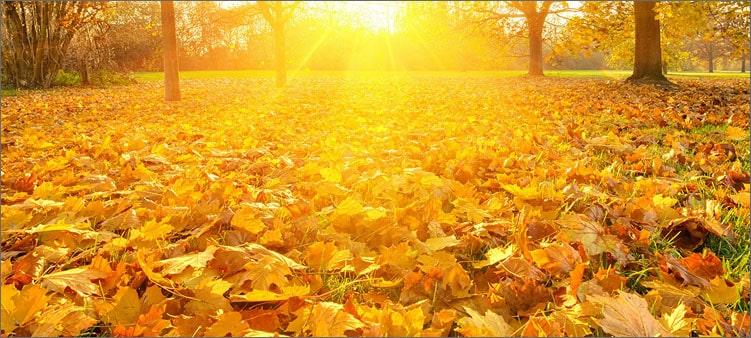 золото-листвы